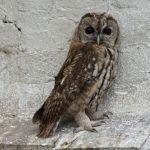 Les centres de soins pour la faune sauvage sont saturés ! - Communiqué de presse