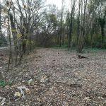 Communiqué de presse : le site Natura 2000 du Vellemolen saccagé