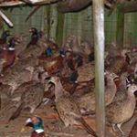 L'animal sauvage est écarté du projet de Code wallon sur le bien-être des animaux