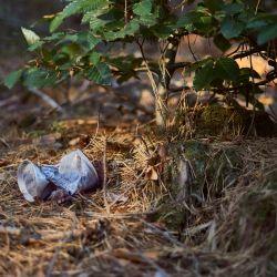 «Souffrance animale: il est temps de rouvrir le débat sur la consigne des canettes»