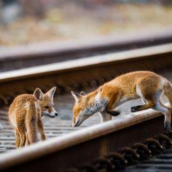 """""""Coexistence"""" - le livre sur la faune sauvage bruxelloise !"""