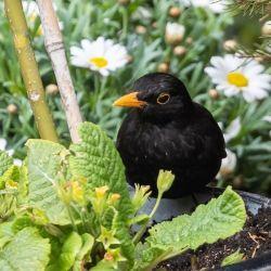 """"""" Il faut une réponse politique transversale pour protéger les oiseaux"""""""
