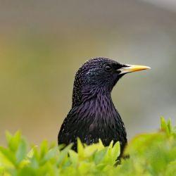 Plus de 50 milliards d'oiseaux sur terre  ?