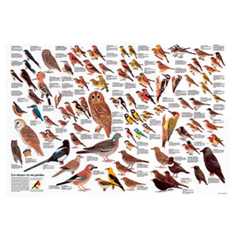 Comptage des oiseaux des jardins nature en ville cergy for Oiseaux de nos jardins en belgique