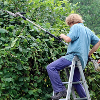 Evitons l'abattage et l'élagage d'arbres en période de nidification !
