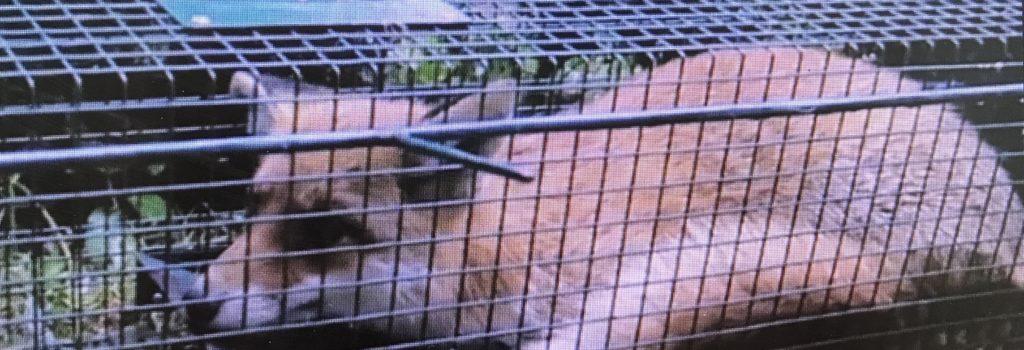 Maltraitance animale