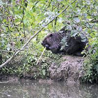 Envoyez un mail au Gouvernement wallon pour une meilleure conservation de la nature !
