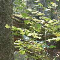 Sauver la forêt de Bialowieza