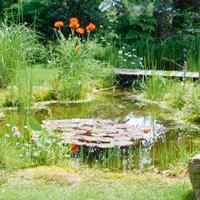 Une mare dans votre jardin