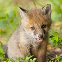 Première dérive de la chasse en Wallonie : le non-respect du bien-être animal et de la législation (1/5)
