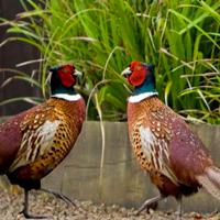 Modification de la Loi sur la Conservation de la Nature, Partie 1/3