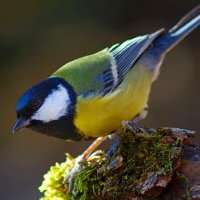Moins d'oiseaux au jardin