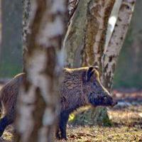 Les chasseurs sont-ils des gestionnaires de l'environnement ?