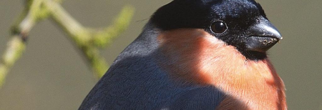 L'homme & l'oiseau 2/2013