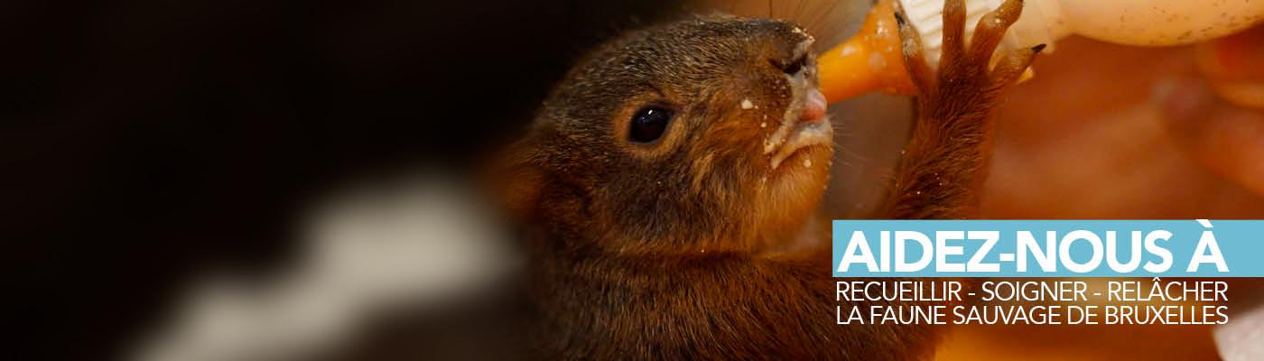 Participez à notre crowdfunding (financement participatif) « Du matériel médical pour la faune sauvage de Bruxelles »