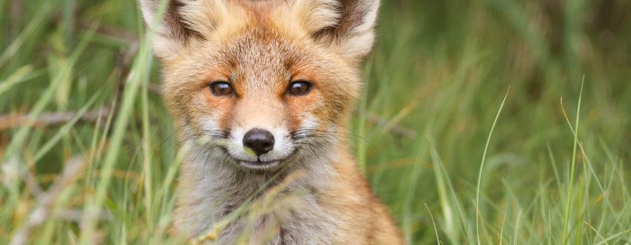 Conservation de la nature : réponses des principaux partis politiques à notre questionnaire