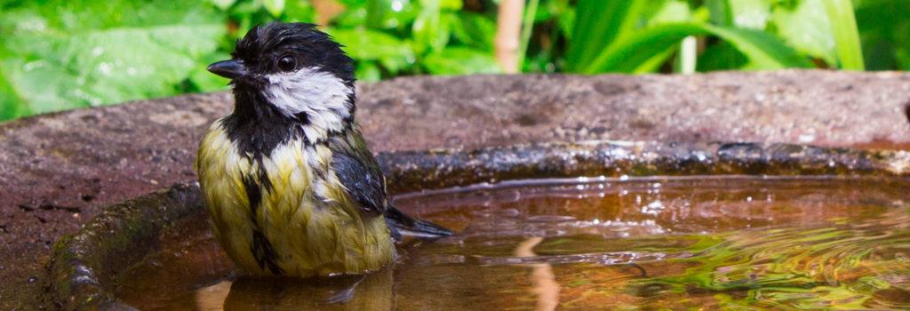 Les oiseaux ont soif ! – Communiqué de presse