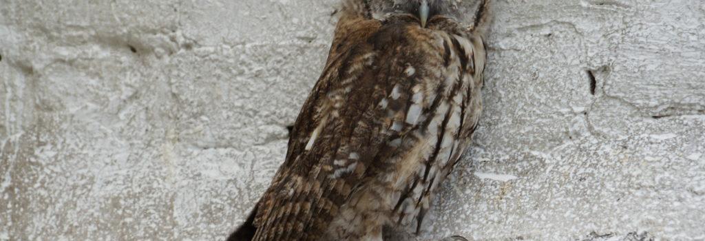 Les centres de soins pour la faune sauvage sont saturés ! – Communiqué de presse