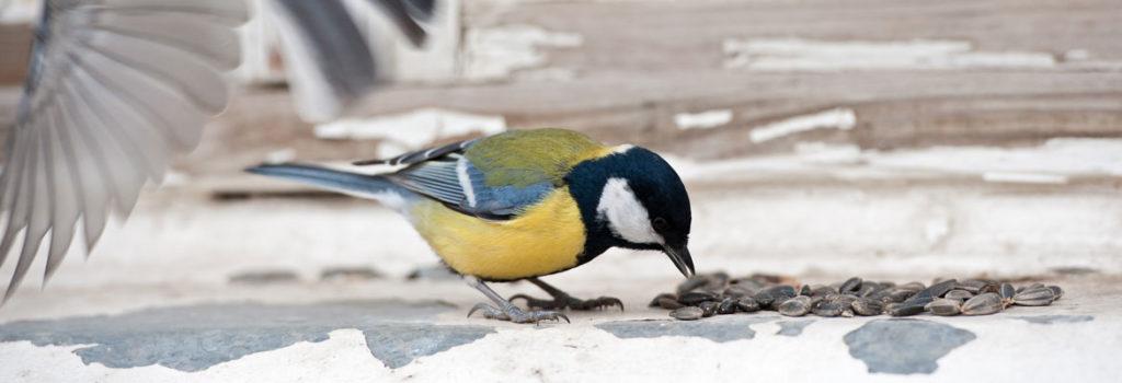 La saison froide arrive, n'oubliez pas les oiseaux des jardins !