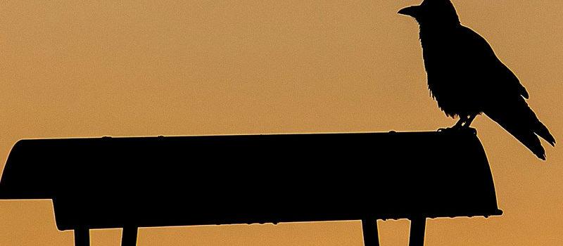 Oiseaux et cheminée