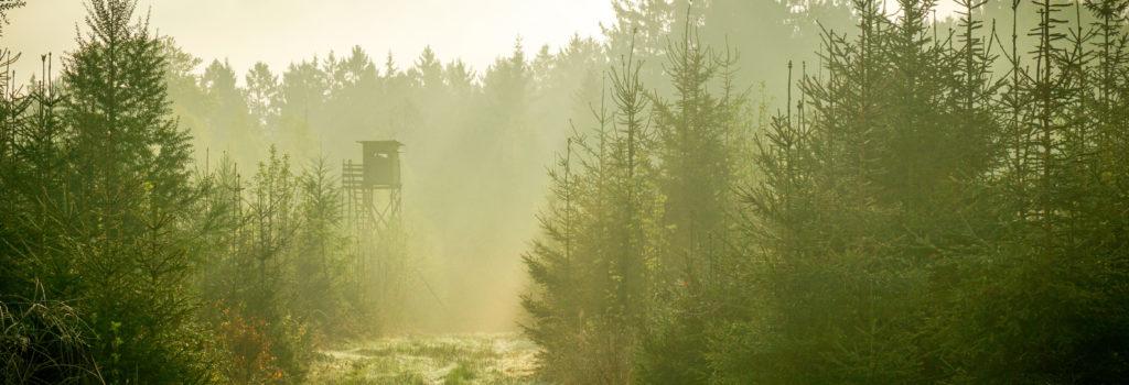 L'avenir de la chasse en Région wallonne!