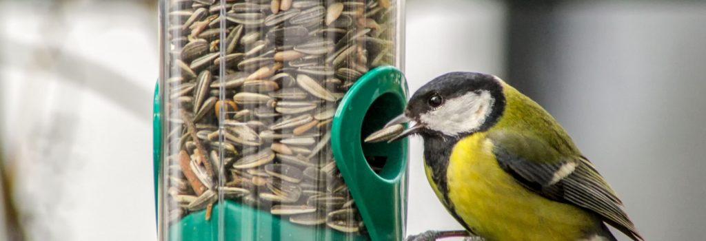 Il fait froid, n'oubliez pas les oiseaux des jardins !