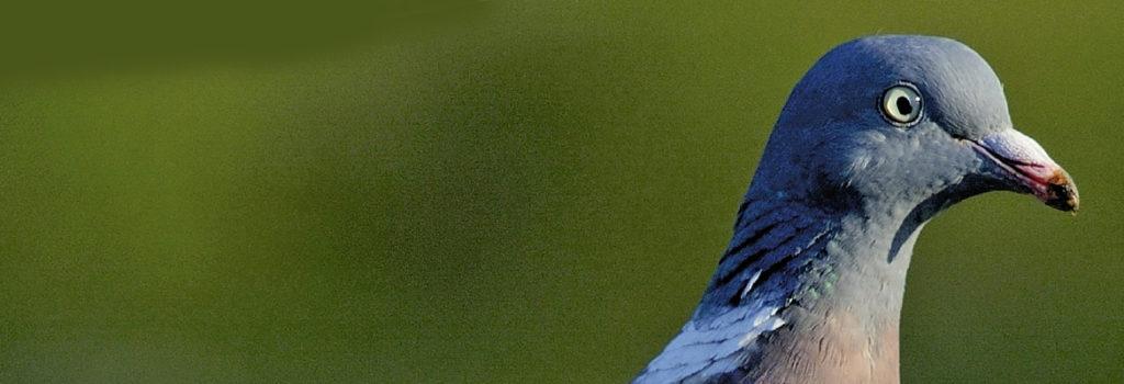 L'homme & l'oiseau 4/2018