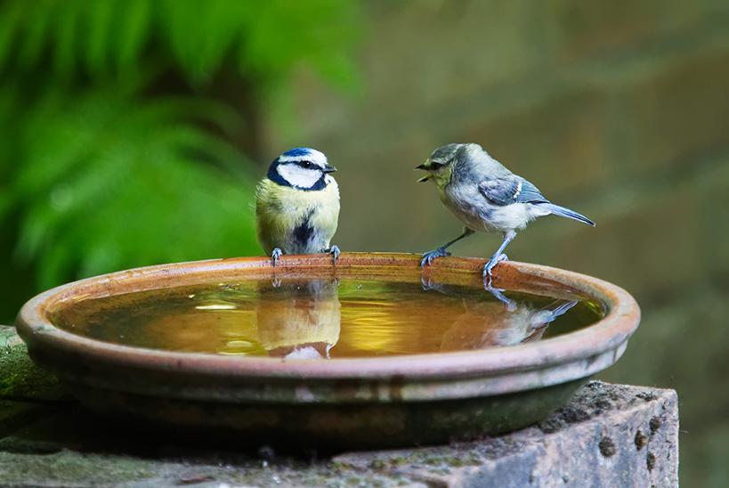 Les Oiseaux Ont Soif Ligue Royale Belge Pour La Protection Des Oiseaux