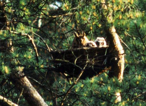 panier de nidification pour rapaces