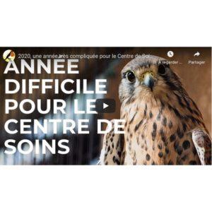 bilan 2020 centre de soins pour la Faune sauvage de Bruxelles
