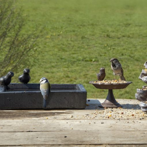 abreuvoir oiseaux carré