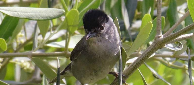 Bonne nouvelle pour les oiseaux migrateurs