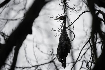 Impacts de la pêche sur les oiseaux
