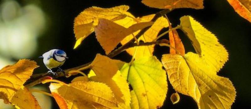 Enquête citoyenne sur la préservation de la biodiversité en région Bruxelloise