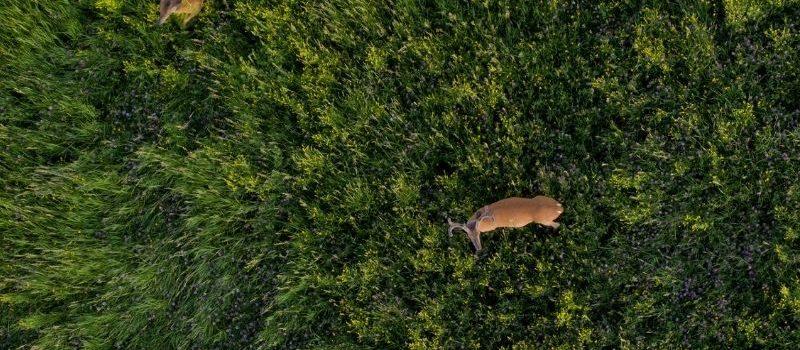 Le danger du drone sur la faune sauvage