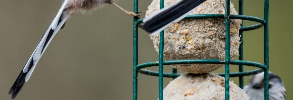 Il fait particulièrement froid cette semaine. Pensez aussi aux oiseaux !
