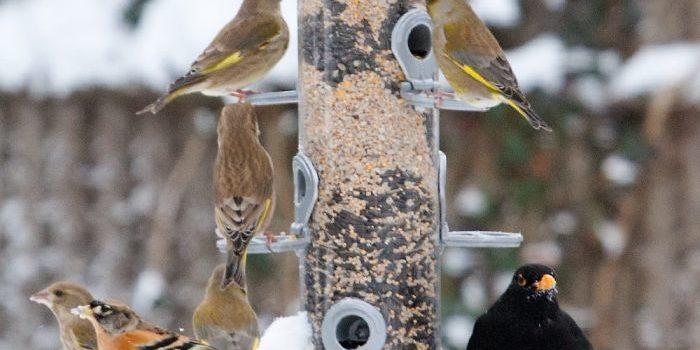 Faut-il offrir des mangeoires aux oiseaux ?