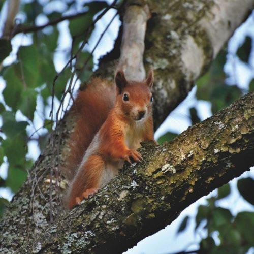 Abri pour écureuil