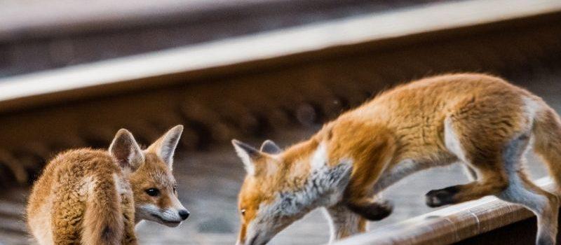 """""""Coexistence"""" – le livre sur la faune sauvage bruxelloise !"""