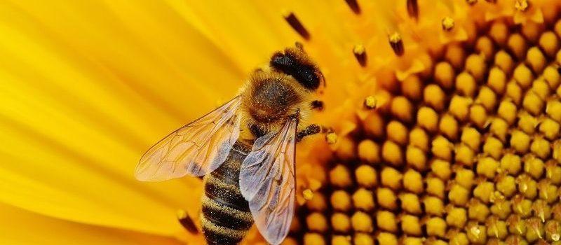 Signons la pétition pour sauver les abeilles et les agriculteurs !